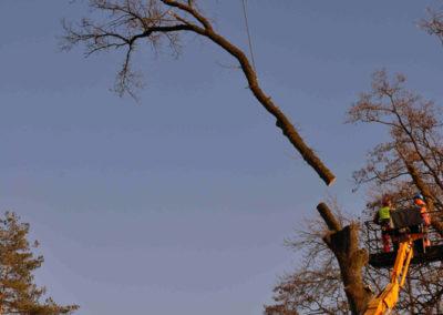 forstgruppe-saedelbach-spezialholzerei-entlang-fluss1